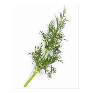 Dill Weed Postcard