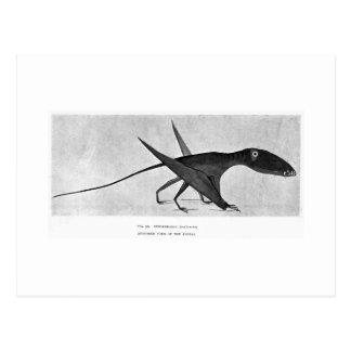 Dimorphodon macronyx art postcard