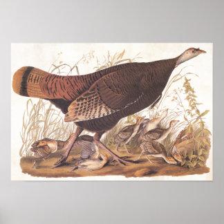 Dinde et poussins Sauvages d'art vintage d'Audubon Poster