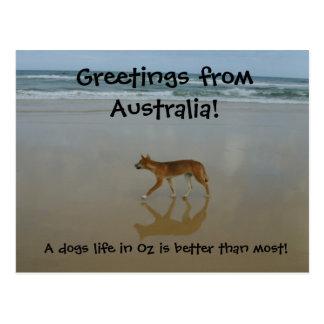 Dingo postcard