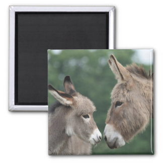 Dinky donkey square magnet