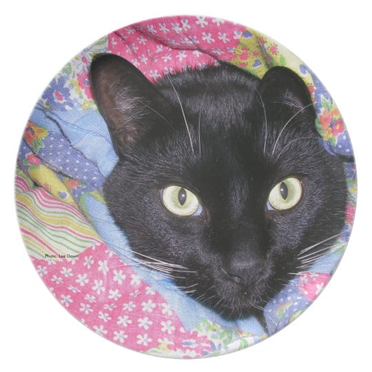 Dinner Plate: Funny Cat wrapped in Blankets Plate