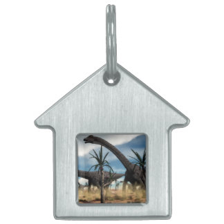Diplodocus dinosaurs herd in the desert pet name tag