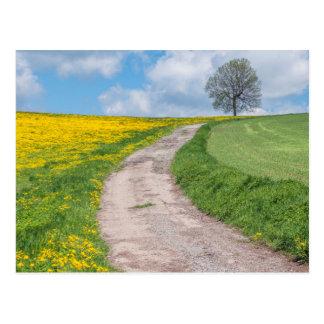 Dirt Road and Tree Postcard