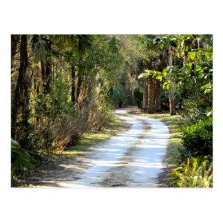 Dirt Road in Micanopy, Florida Postcard