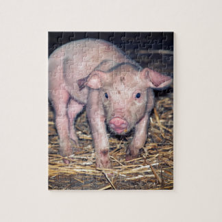 Dirty piglet jigsaw puzzle