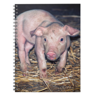 Dirty piglet notebooks
