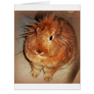 Disapproving Bunny Rabbit Greeting Card