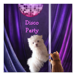 Disco Party Dog Cat Maltese Bachelorette Card