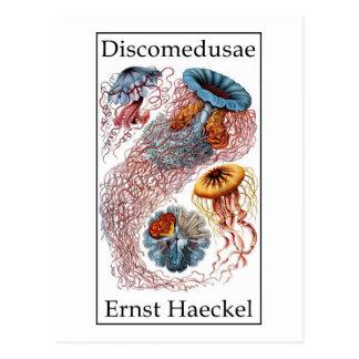Discomedusae by Ernst Haeckel Postcard