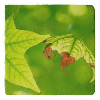 Diseased Maple Leaf Trivet