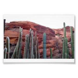 Disney Desert Photo Print