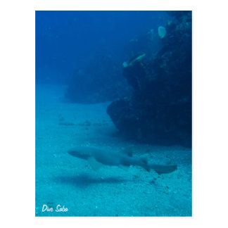 Dive Saba postcard-Nurse shark Postcard