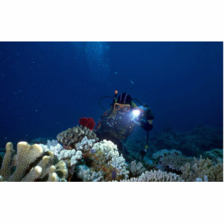 Diver shooting video on coral bed acrylic cut out