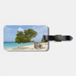 Divi Divi Tree on the Caribbean Island of Aruba Luggage Tag