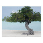 Divi Divi Tree Poster