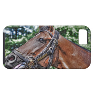 Divine Luck - Phipps Stables iPhone 5 Cases