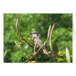 Divine origin... card
