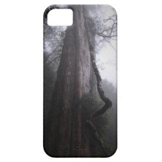 Divine Tree 551 B.C. iPhone 5 Case