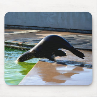 Diving Californian sea lion Mouse Pad