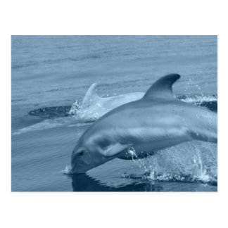 Diving Dolphin Postcard