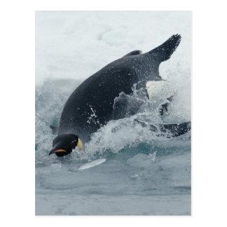 Diving Emperor Penguin Postcard