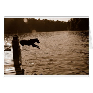 Dixie jumping from dock card