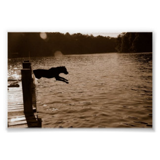 Dixie jumping off the dock poster