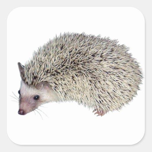 DIY Hedgehog left Stickers
