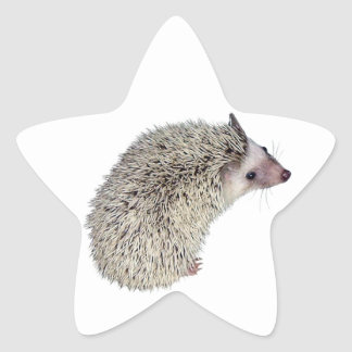 DIY Hedgehog right Star Sticker