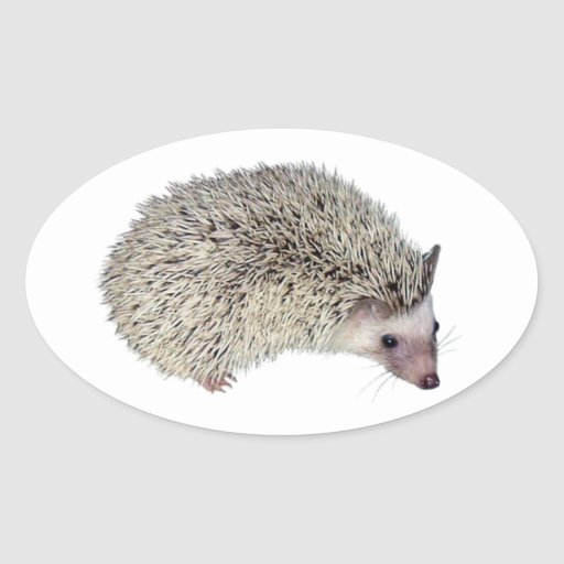 DIY Hedgehog right Oval Stickers
