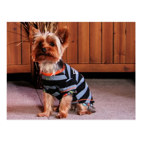 DJ - Yorkshire Terrier - Smith Postcard