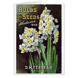 DM Ferry Seeds and Bulbs 1898 Card