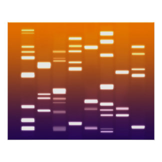 DNA Genetic Code Orange Blue Poster