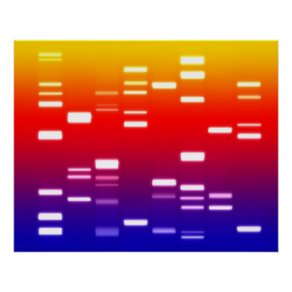 DNA Genetic Code Rainbow Poster