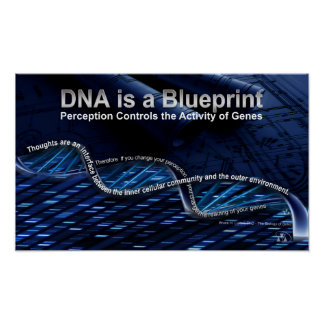 DNA is a Blueprint Poster