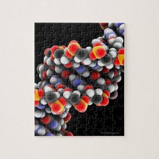 DNA molecule. Molecular model of DNA Puzzle