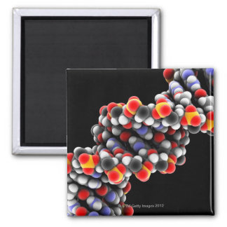 DNA molecule. Molecular model of DNA Square Magnet