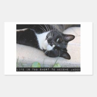Do Not Be Jaded Funny Cat Sticker