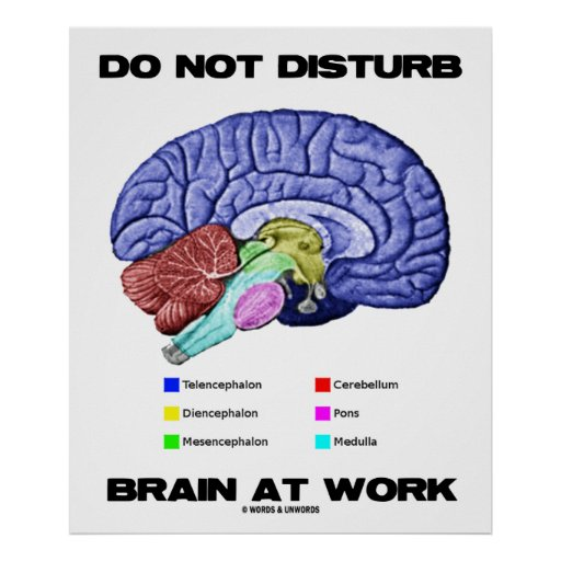 Do Not Disturb Brain At Work (Anatomical Humor) Poster