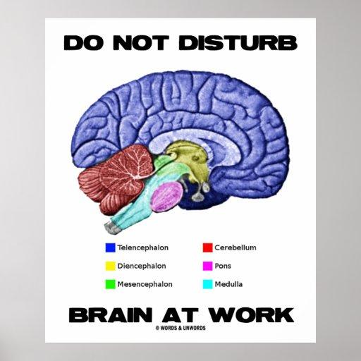 Do Not Disturb Brain At Work (Anatomical Humor) Poster