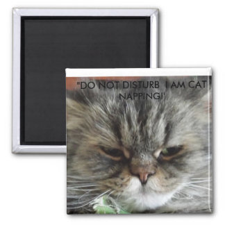 DO NOT DISTURB I AM CAT NAPPING. MAGNET