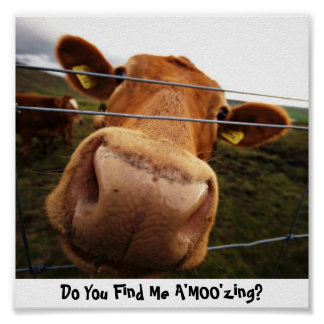 Do You Find Me A'MOO'zing? Poster