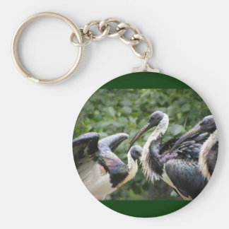 Do You Zoo? Straw-necked Ibis Basic Round Button Keychain