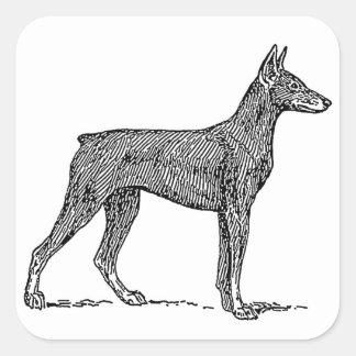 Doberman_Pinscher drawing Square Sticker