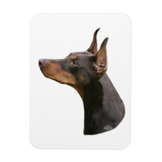 Doberman Pinscher - red/brown head Magnet