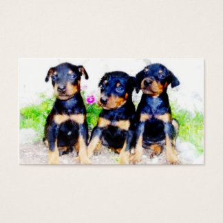 Doberman puppies business cards