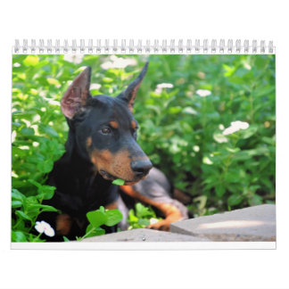 Doberman Puppy Calendar