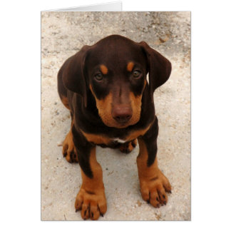 Doberman Puppy Card