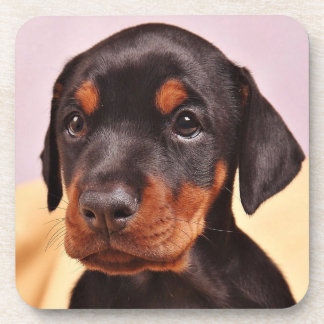 Doberman Puppy Coaster